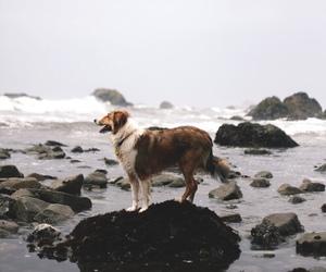 dog, animal, and sea image