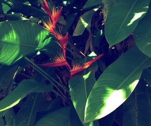 flower, puerto rico, and orange image