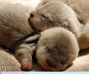 babies, otters, and baby image