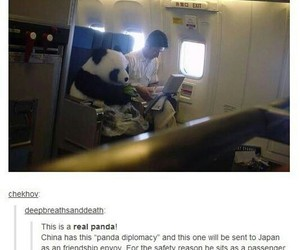 funny, panda, and tumblr image