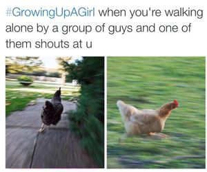 funny, lol, and Chicken image