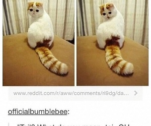 cat, lol, and funny image