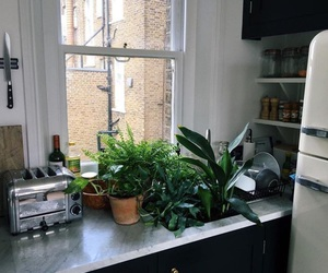 green, kitchen, and plants image