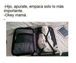 cat, frases, and funny image