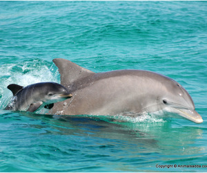dolphin image