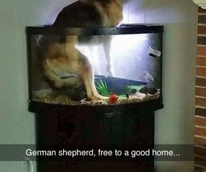 german shepherd and free to good home image