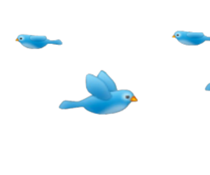 bird, overlay, and blue image
