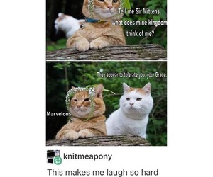funny and cats image