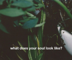 soul, quotes, and grunge image