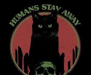 cat, black, and dark image