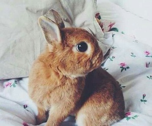 bunny, animal, and bed image