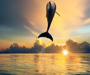 Animales, belleza, and delfin image