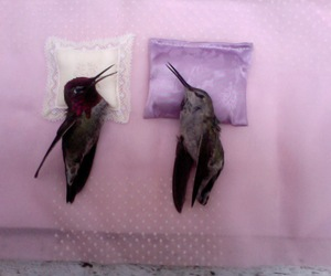bird, pink, and death image