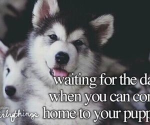 puppies and just girly things image