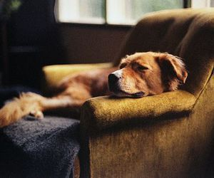 dog, animal, and sleep image