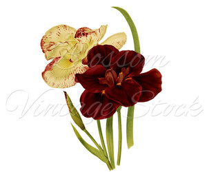 digital image, wall decor, and floral art image