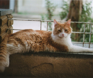 cat, cat photography, and ginger tabby image