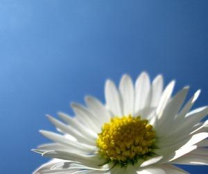 blossom, sky, and blue image