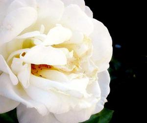 photography, marina hoff, and flower image
