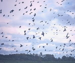 bird, sky, and nature image