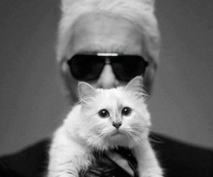 cat, karl lagerfeld, and chanel image