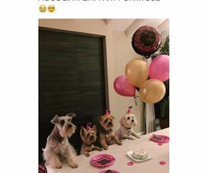 animals, dog, and funny image