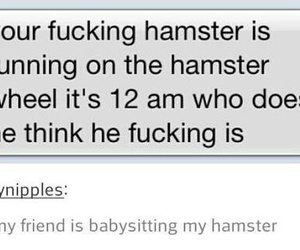 funny, hamster, and tumblr image