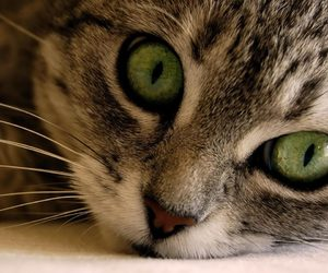 cat, animal, and green eyes image