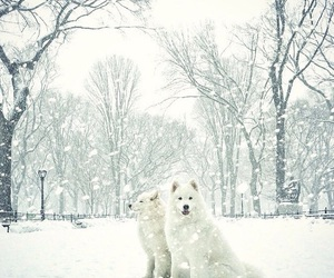 snow, dogs, and white image