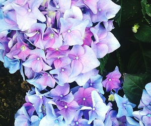 flower, lavender, and lilas image