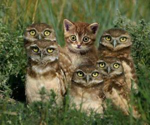 cat, owl, and funny image
