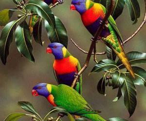 bird and rainbow image