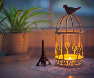 candle, bird, and cage image