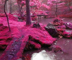 Dream, fairy, and nature image