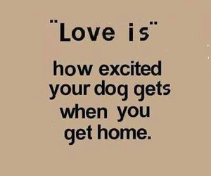 dog, love, and quote image
