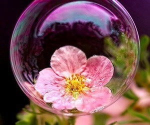 buble, flowers, and serenity image