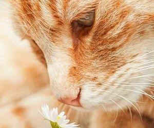 animal, animals, and daises image