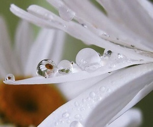 drops, flowers, and white image