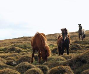 photography and wild horses image