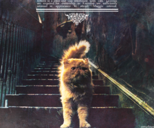 harry potter, cat, and hermione image