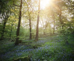 flowers, forest, and outdoors image