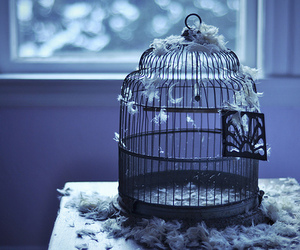 cage, feather, and bird image