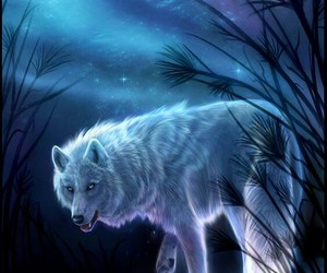 wolf and blue image