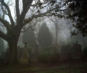 cemetery and trees image