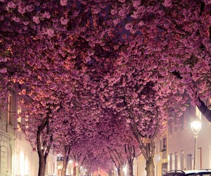 flowers, pink, and tree image