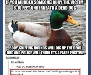 funny, duck, and tumblr image