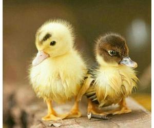 animals, chicks, and nature image