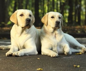 beautiful, dogs, and cute image