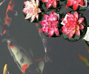 flowers, fish, and nature image