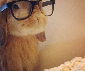 cute, bunny, and glasses image